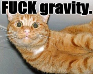 fuck_gravity_cat