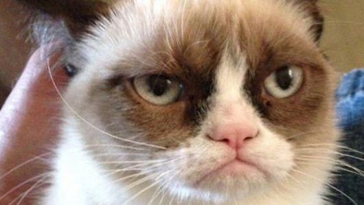 Après être devenue une star du web, «Grumpy cat» pourrait bien devenir une star du cinéma