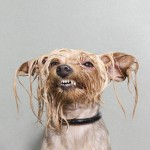 wet-dogs-striking-paws-sophie-gamand-7